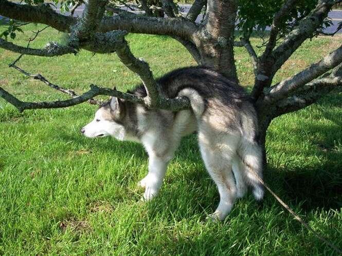 Animais que aproveitam o conforto dos lugares mais improváveis
