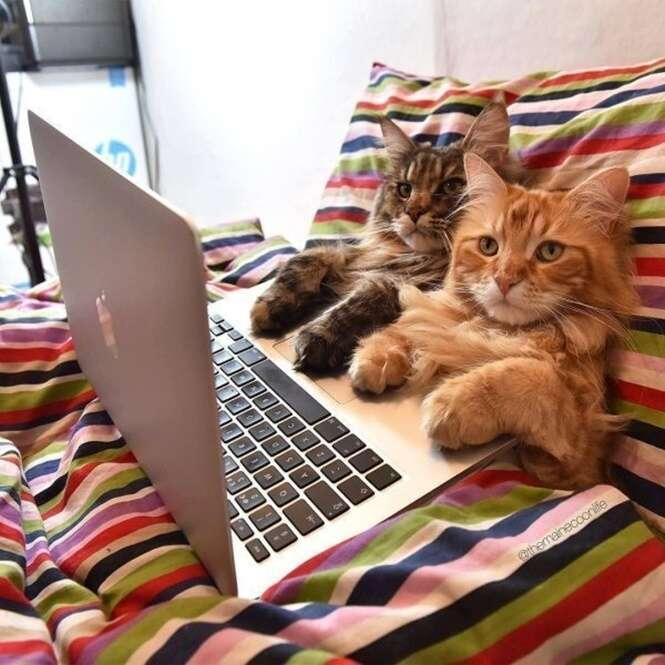 Imagens curiosas envolvendo gatos