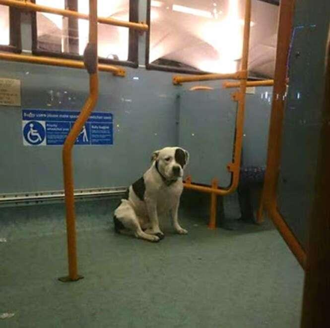 Cão é encontrado encolhido dentro de ônibus
