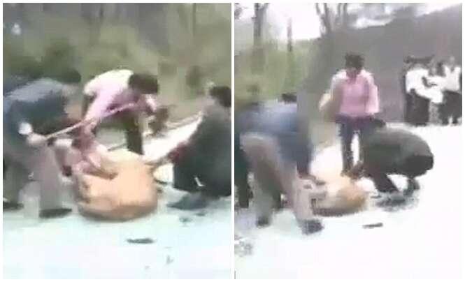 Leoa afunda dentes em criança enquanto homens tentam libertar vítima do ataque