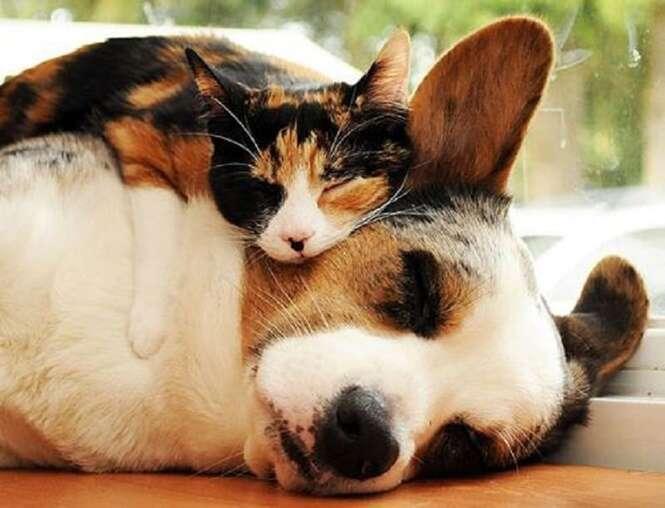 Fotos adoráveis de animais sendo usados como travesseiros