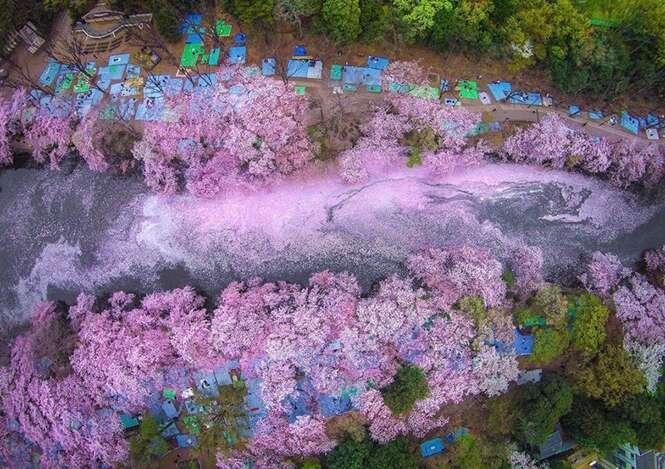 Fotógrafo usa drone para registrar lindas imagens de cerejeiras japonesas