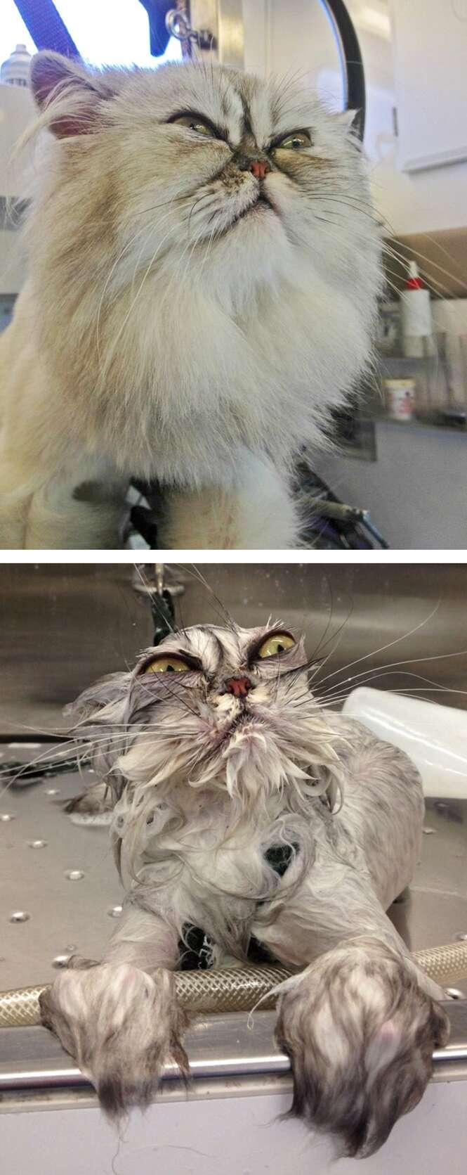 Fotos hilárias de animais antes e depois do banho