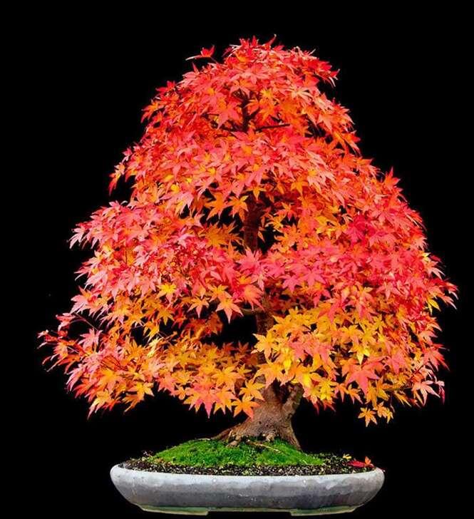 Foto: bonsaibark