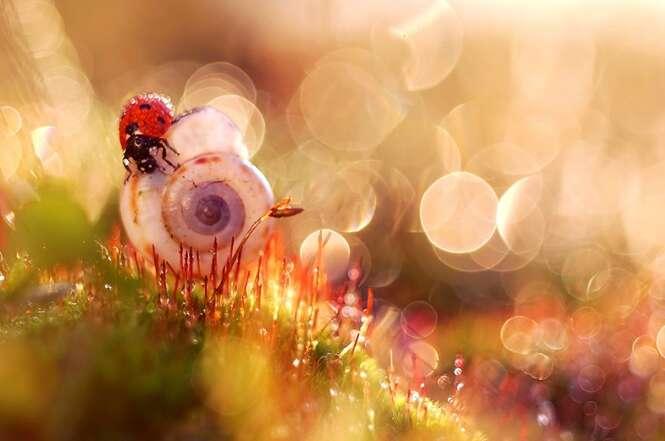 Fotógrafa usa a microfotografia para registrar imagens incríveis da natureza