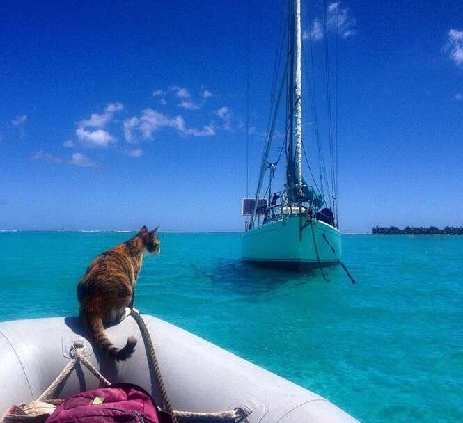 Mulher larga emprego para dar a volta ao mundo em veleiro junto de gatinho