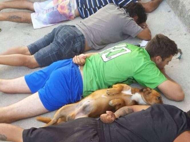 Fotos demonstrando como os cães são fiéis aos seus donos