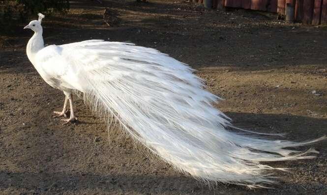 Fotos de belas aves encontradas pelo mundo