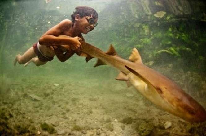 Fotos incríveis que farão você ter outra visão dos tubarões