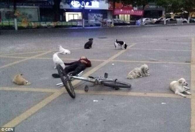 Cães de rua cercam corpo de idosa após mulher morrer no meio da rua