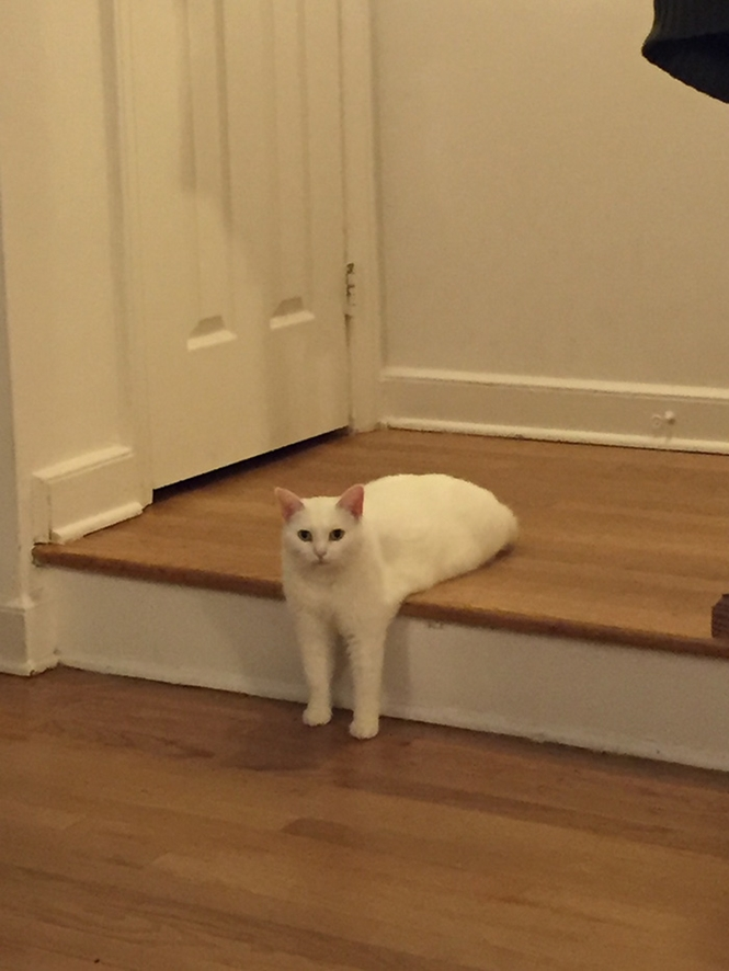 """Foto de gatinho """"pela metade"""" cai na web e internautas não perdoam"""