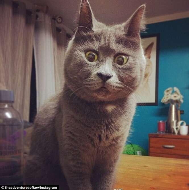 Gato se torna sensação na internet por causa de sua expressão