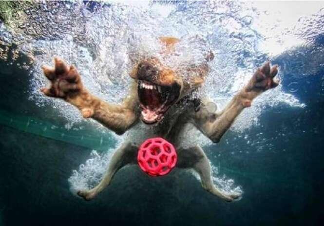 Fotos curiosas de cães debaixo d'água
