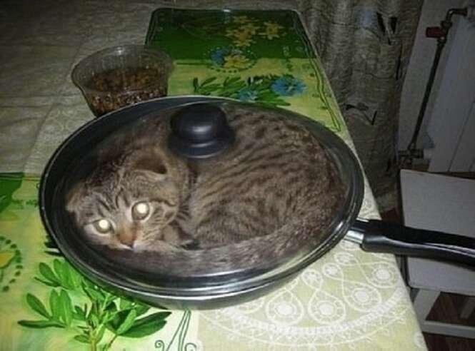 Fotos hilárias de gatos presos