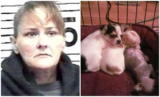 Mulher mata cão chihuahua do marido e usa restos do animal para falsificar um aborto espontâneo