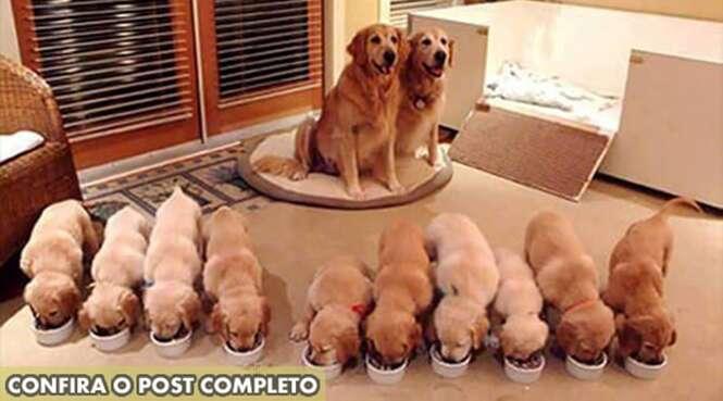 Lindas fotos de cães com seus filhotes