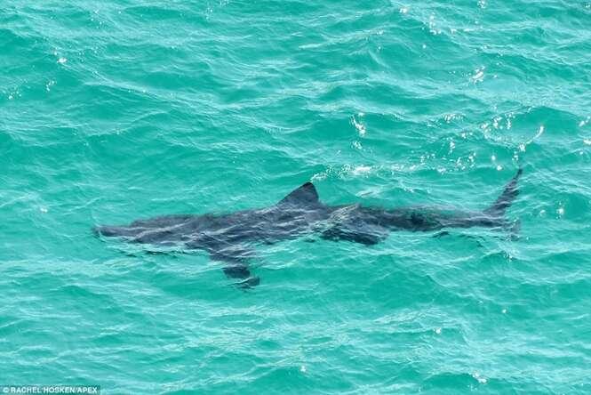 Enorme tubarão causa pânico ao aparecer em águas rasas de praia