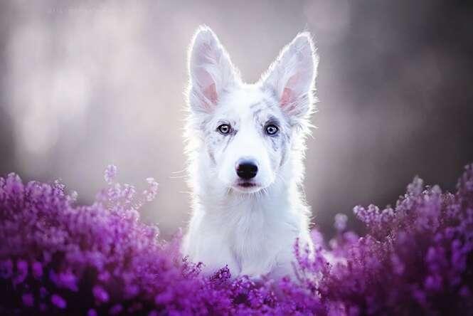 Fotógrafa polonesa chama atenção registrando as mais lindas imagens de cães