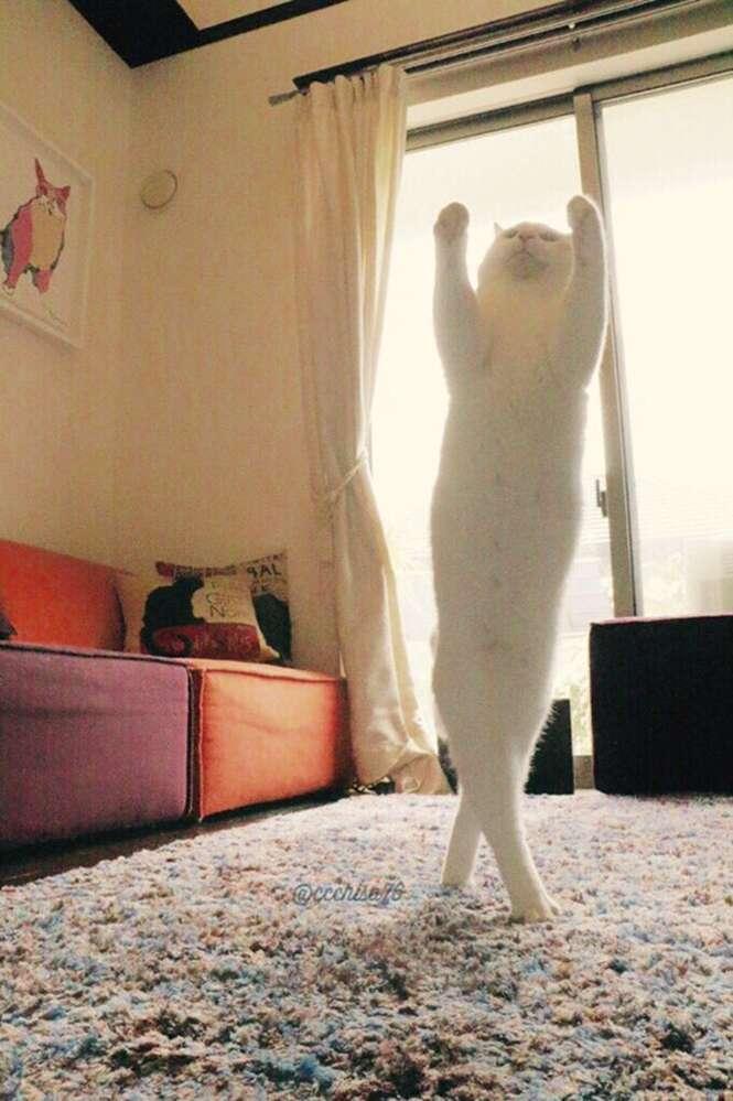 Gatinho que dança balé quando não tem ninguém por perto