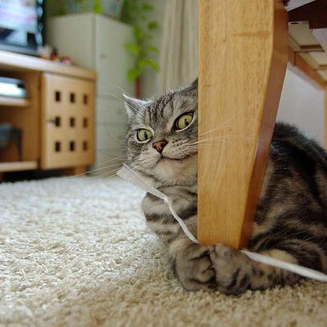 Imagens divertidas de gatos