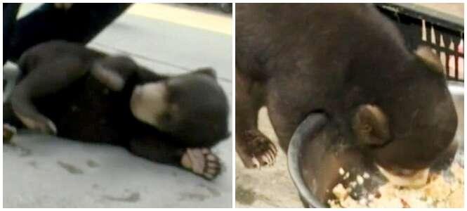 Chinês adota cão de rua e descobre se tratar de urso em extinção