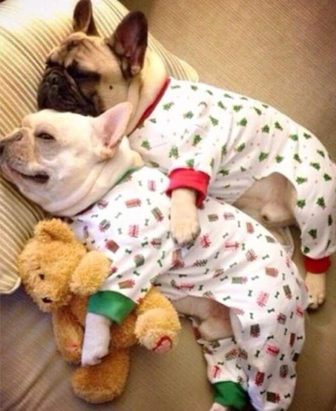 Foto: dogsinpajamas