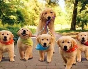 10 lindas fotos de cães com seus filhotes