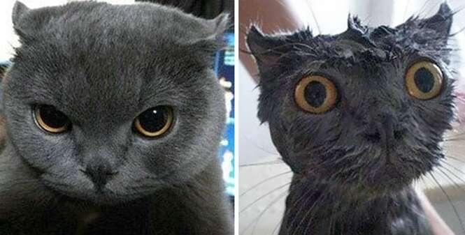 15 fotos hilárias de animais antes e depois do banho