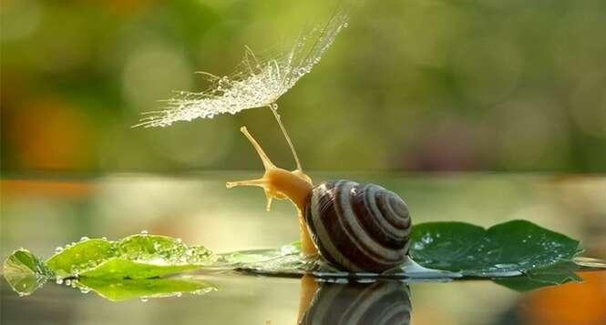 Imagens mágicas que vão mudar sua forma de enxergar os caracóis