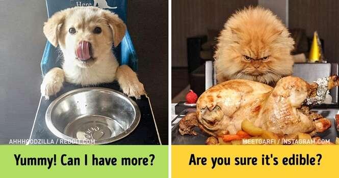 Imagens que comprovam que cães e gatos são de mundos completamente diferentes