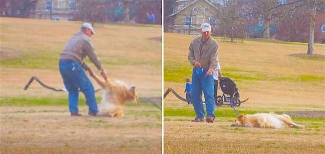 Cãozinho se finge de morto para ficar mais tempo no parque