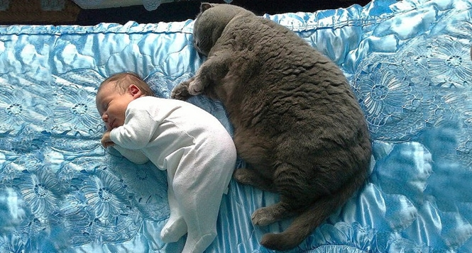Fotos que explicam por que as crianças devem passar mais tempo com seus animais de estimação