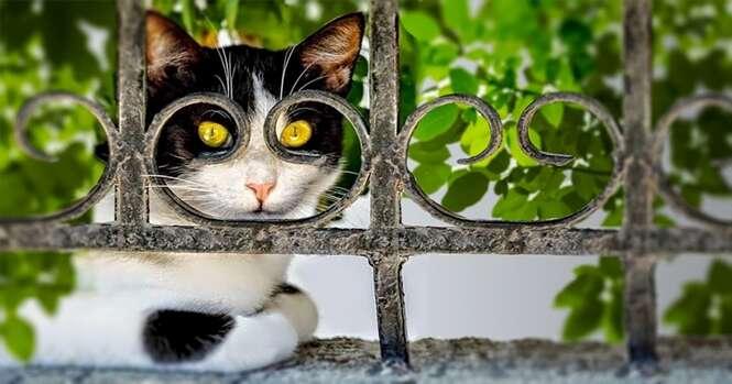 Fotos de gatos capturadas no momento perfeito