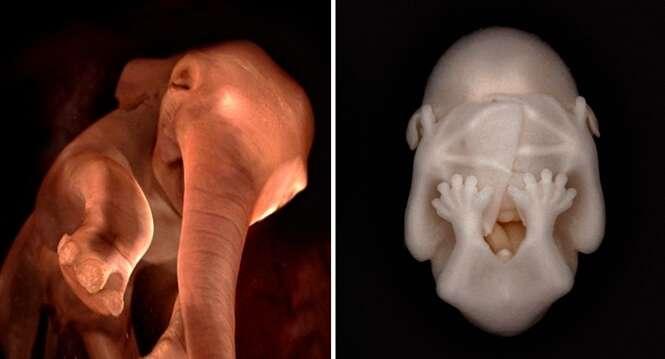 Fotos surpreendentes de animais no útero