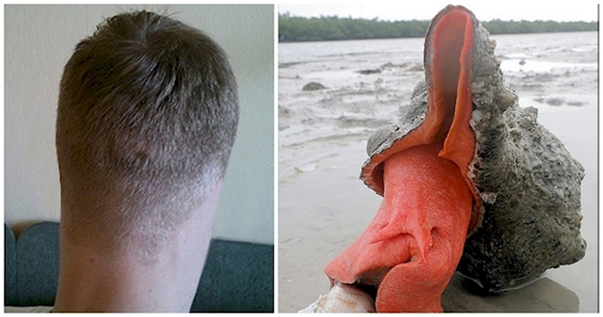 Fotos reais que vão te fazer queimar os neurônios para entender