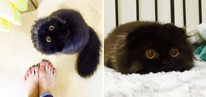 Conheça o gatinho fofo que nasceu com olhos de coruja
