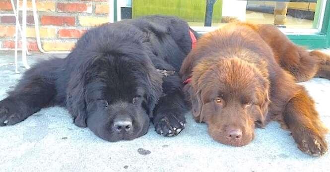 Esses dois cães parecem comuns, mas quando se levantam...