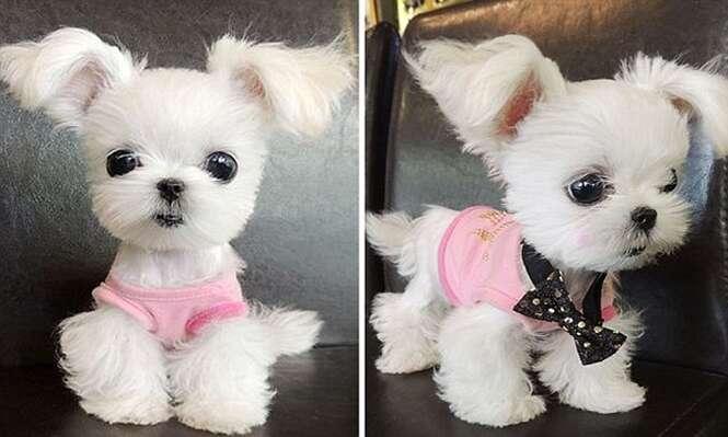 Cão mais fofo do mundo faz enorme sucesso na internet