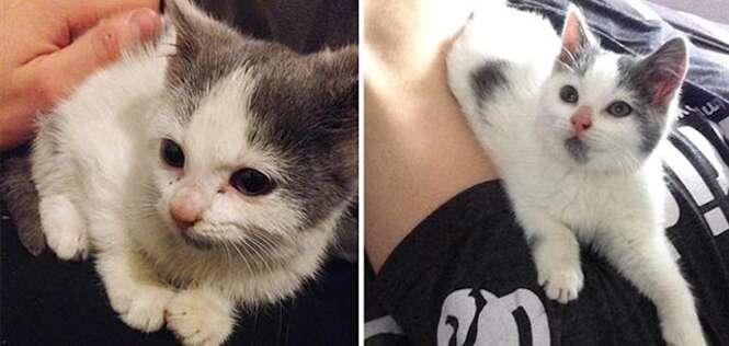 Imagens que provam que a adoção faz bem aos cães e gatos