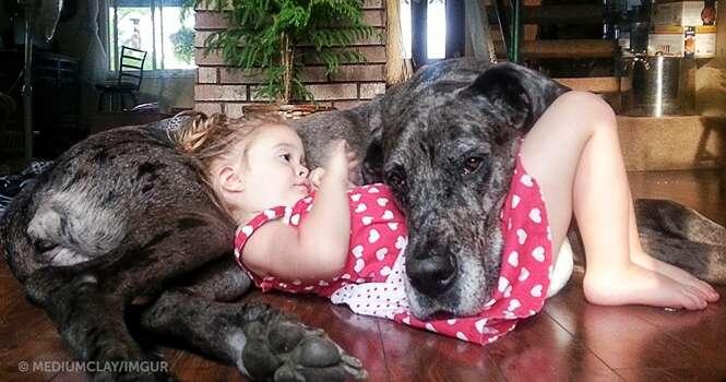 Imagens ultra fofas que provam que os cães são realmente os melhores amigos dos homens