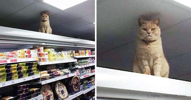 Gatinho se recusa sair de supermercado mesmo sendo expulso diversas vezes