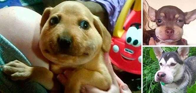 Cães que aprenderam da forma mais cruel que não podem mastigar abelhas