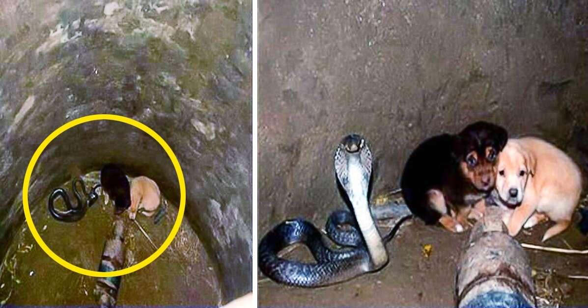 Cães caem em buraco onde havia uma cobra antes de algo impressionante acontecer