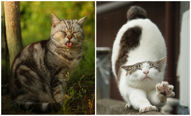 Imagens curiosas de gatos