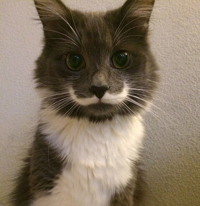 Foto: © Hamilton The Hipster Cat - Facebook