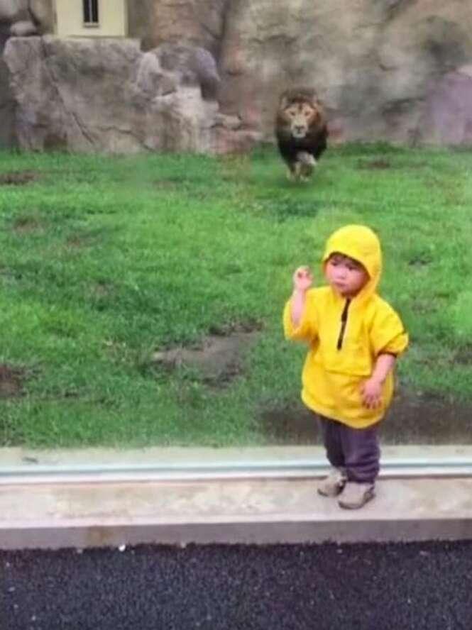 Leão corre para atacar criança de 2 anos em zoológico no Japão e se dá mal