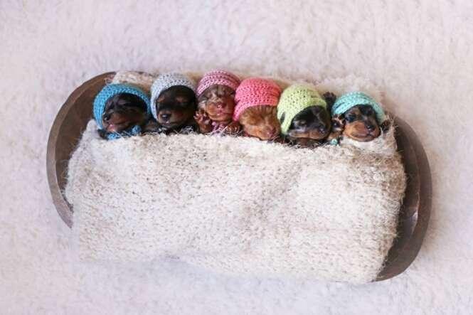 Cadela posa com filhotes recém-nascidos em adorável sessão de fotos