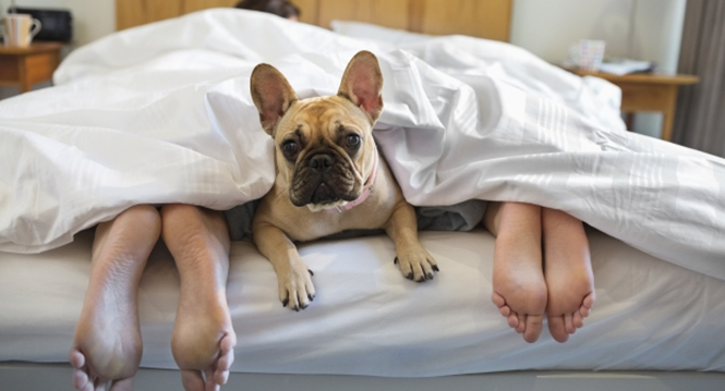 Coisas que você nunca deve fazer na cama