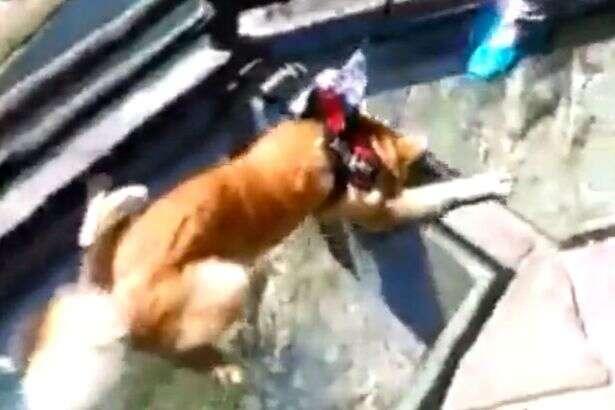 Cão com medo de altura fica petrificado ao atravessar passarela de vidro