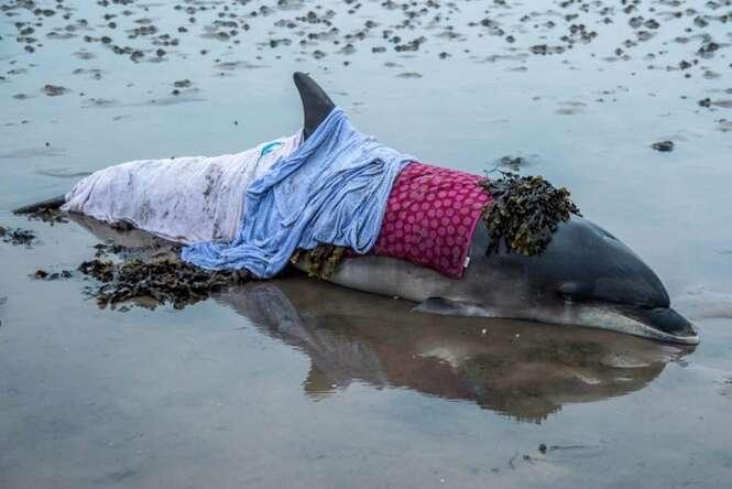 Golfinho encalhado tem a vida salva graças a voluntários